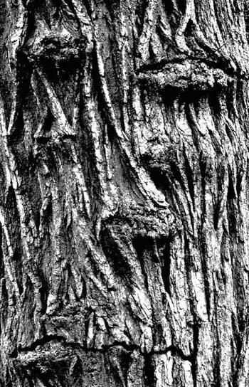 Joël Hauet - arbre1