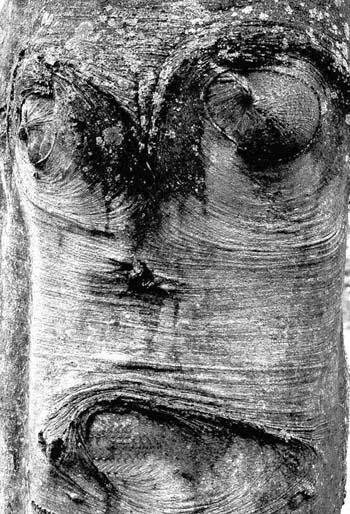 Joël Hauet - arbre2