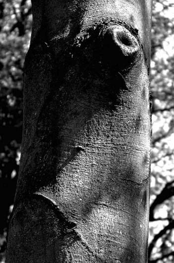 Joël Hauet - arbre4