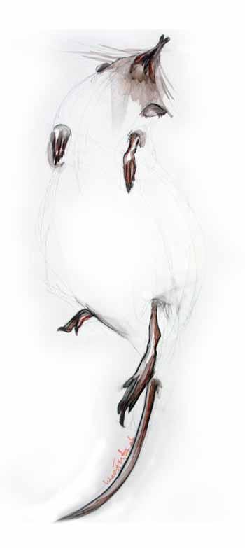 """Sophie Lucas Faytre - """"La danse de la musaraigne"""" - huile sur toile - 60 x 80"""