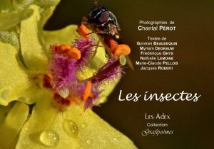 grafipoèmes - Les insectes